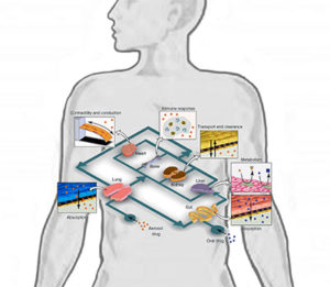 Wikimedia Commons illustration of 'tissue on a chip' concept.